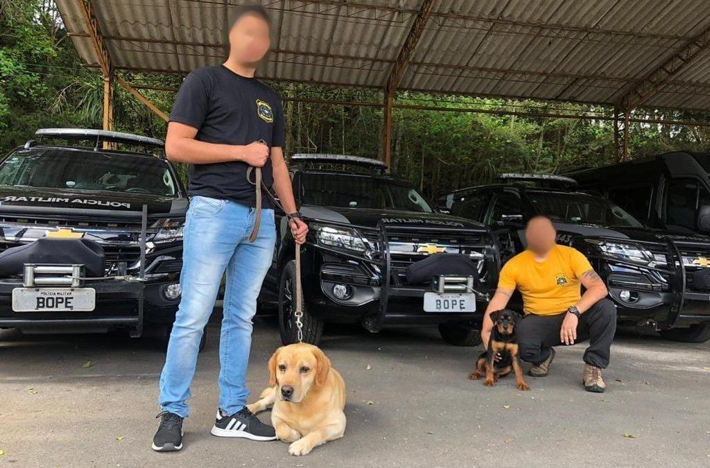 Treinamento dos Cães do Grupo Risco Zero