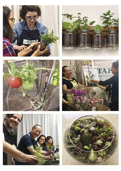 Hortas e plantas de varanda - ETAF
