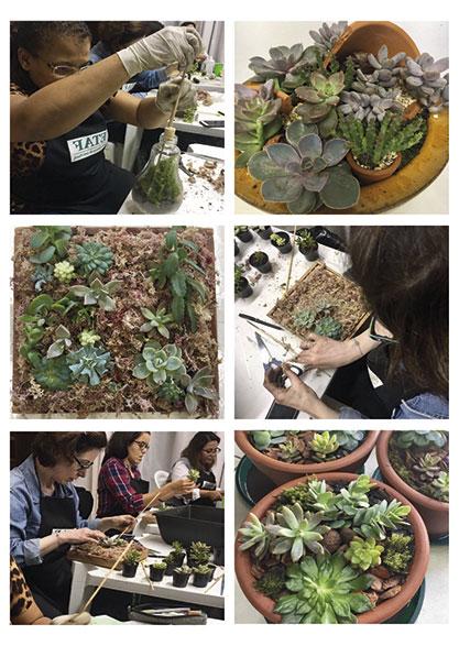 Terrários e mini-jardins - ETAF