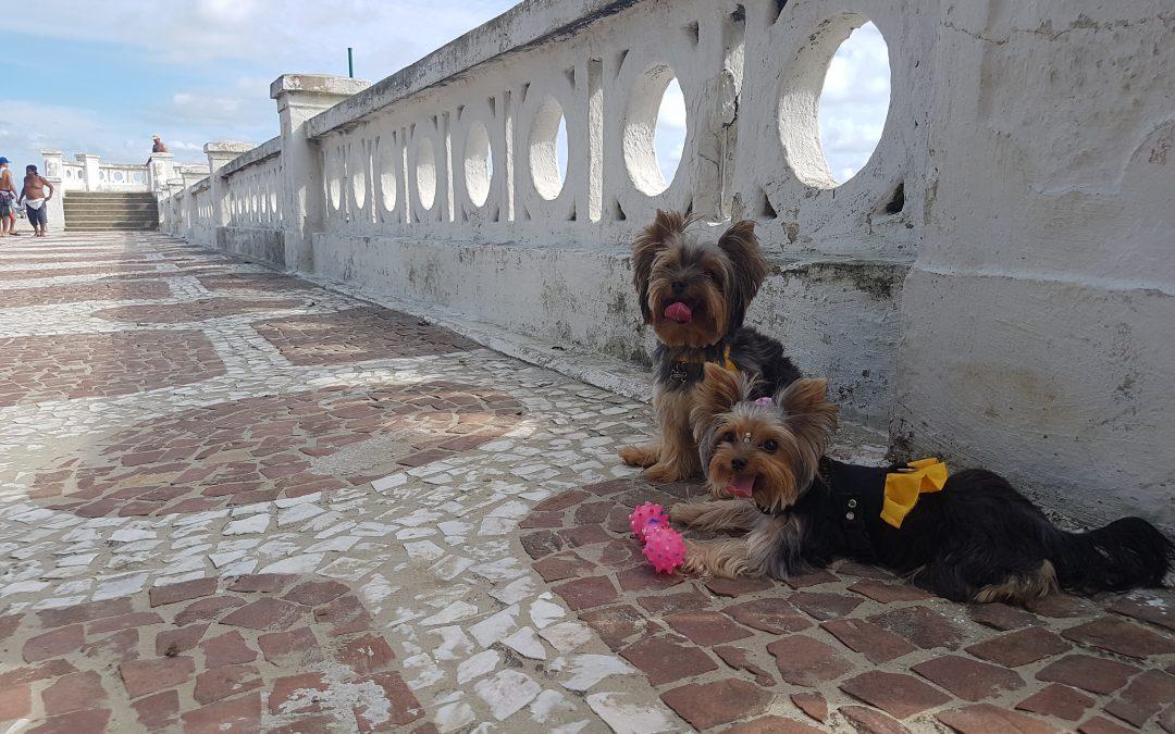 Dicas para cuidar dos cães no verão