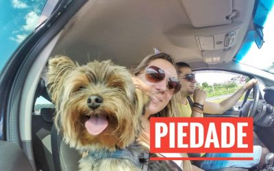 Viagem Petfriendly: Piedade/SP