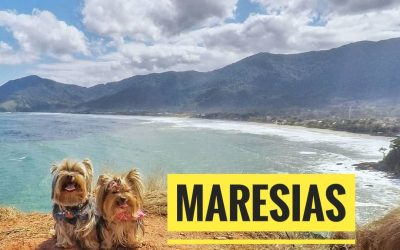 Viagem Petfriendly: Maresias/SP