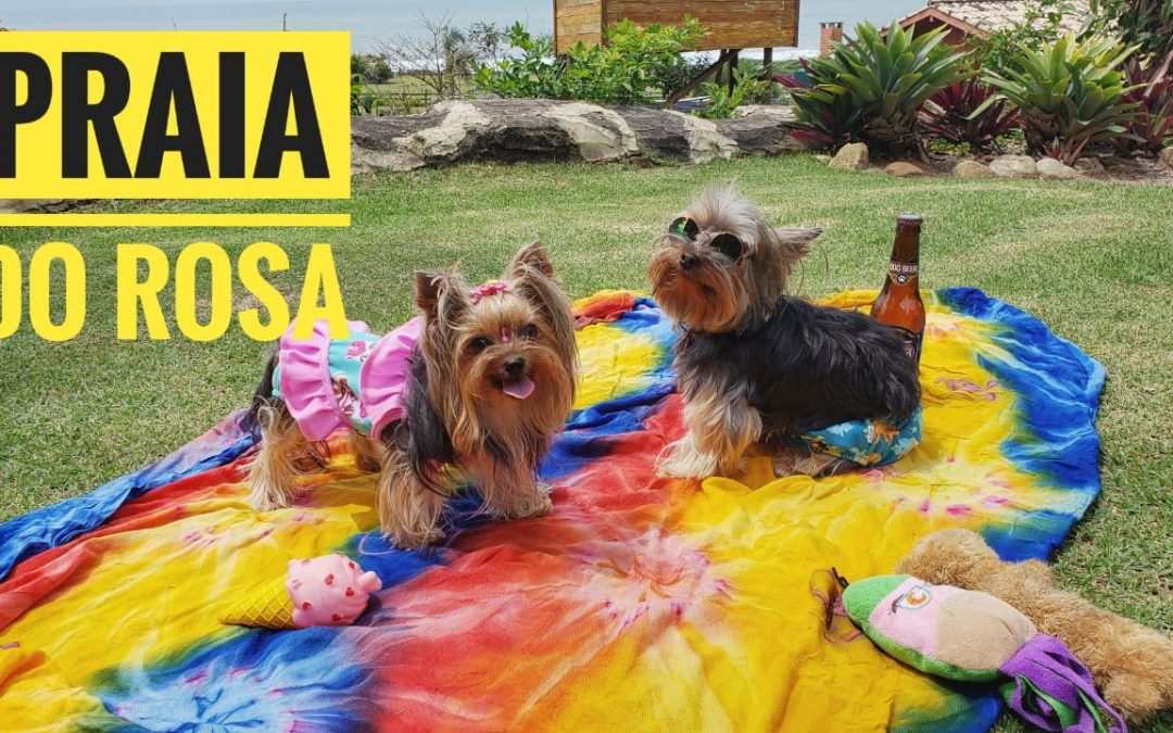 Viagem Petfriendly: Praia do Rosa/SC