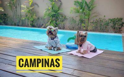 Viagem Petfriendly: Campinas/SP