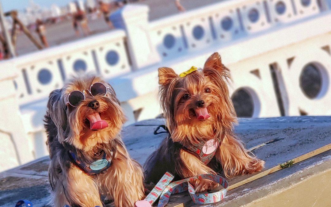 Vacinação dos cães: Você sabe a importância dela?