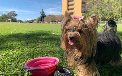 Pesquisa Radar Pet: Brasil conta com a segunda maior população pet do mundo