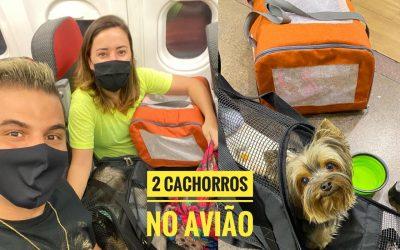 Viagem de avião com dois cachorros?