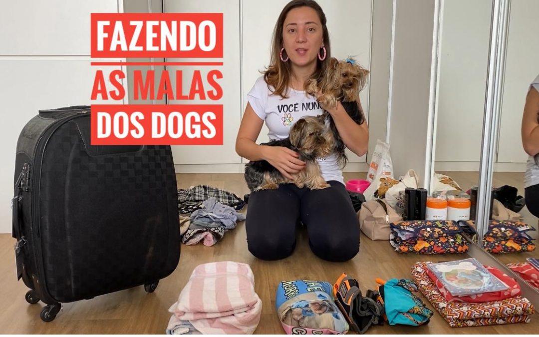O que tenho que levar na mala do meu cachorro?