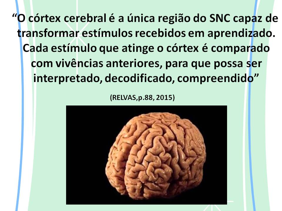 Córtex cerebral