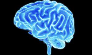 ilustração cérebro azul